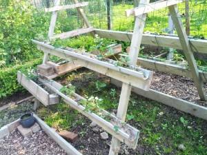 Houten stelling met dakgoten voor aardbeien